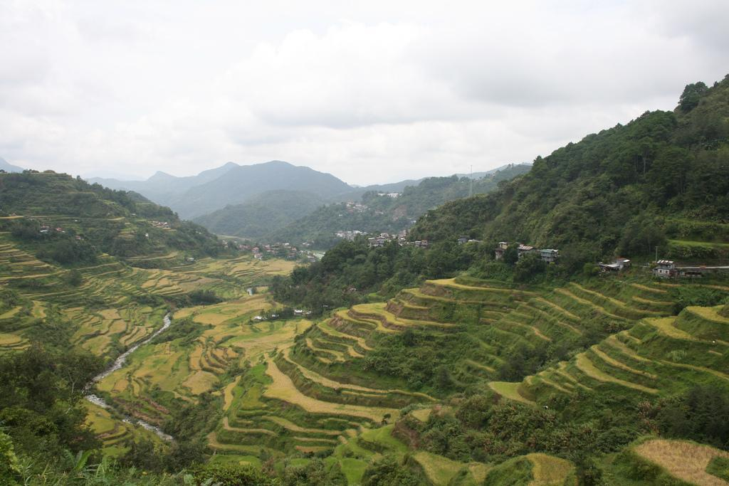 Banaue Rice Terraces: A Marvelous Showcase of History and Culture