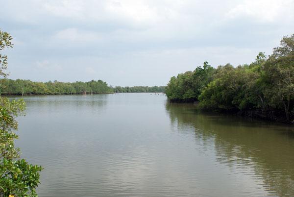 Talibon Mangrove Co-Management Area