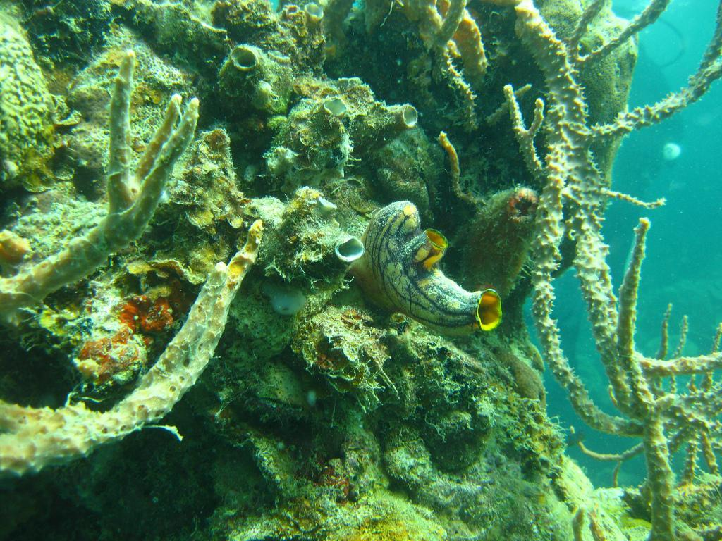 Diving at Coron Bay