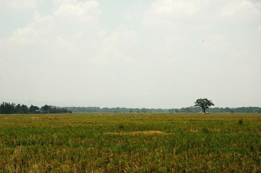 Nueva Ecija: The Food Bowl and Rice Granary of Central Luzon