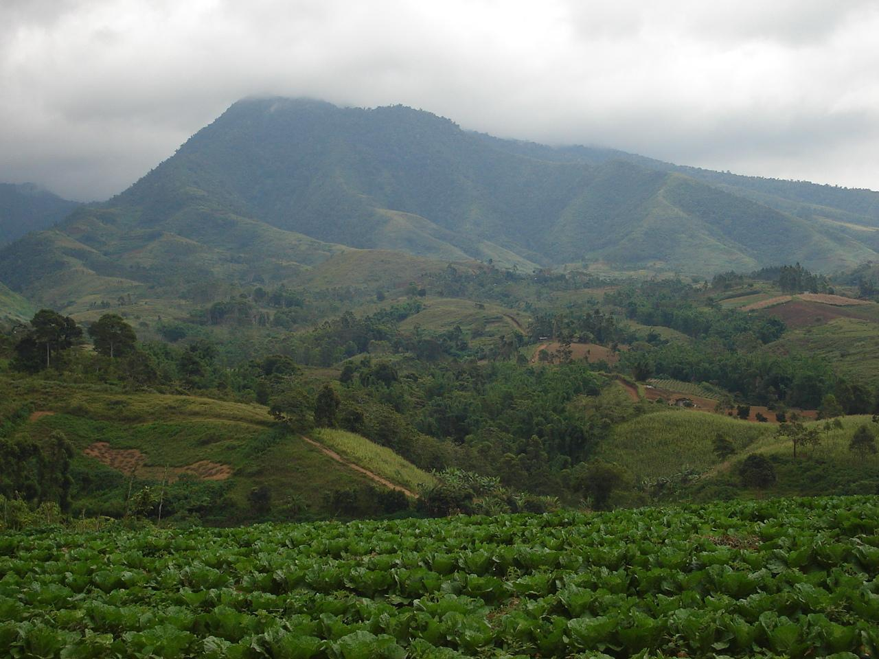 Mount Kitanglad Range Natural Park