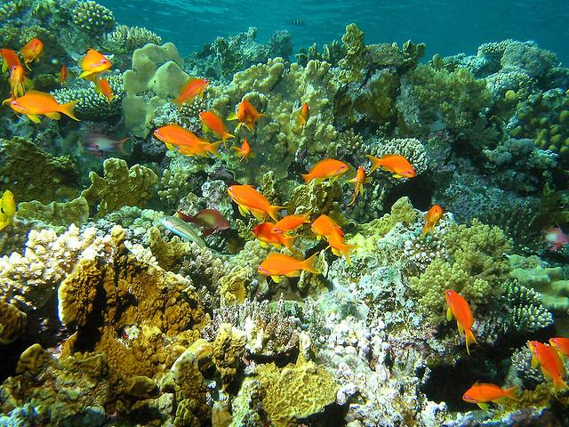 Tubbataha Reef: The Best Diving Destination